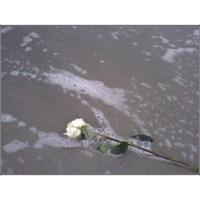 Flower_foam