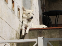 King_of_the_dogs_matera