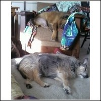 Jack_and_sasha_sleeping_3