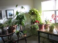 Conservatory_corner_1