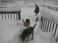 Dog_play