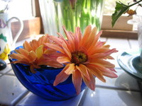 Orange_flowers_and_blue_bowl_1